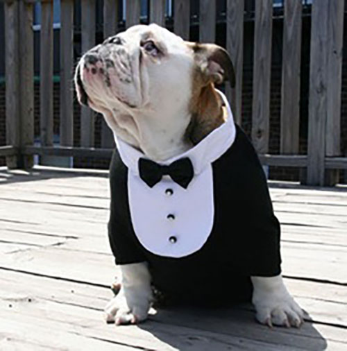 PetWedding 1
