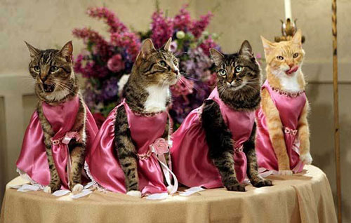 PetWedding 2