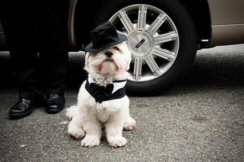 PetWedding 8