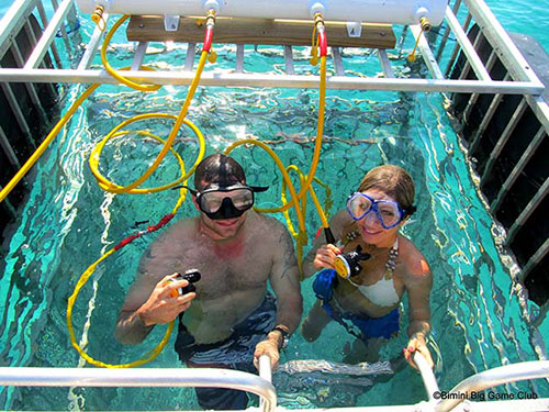 getting married in a shark cage sounds jawsome